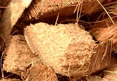 Coconut Husk Chips Large Size